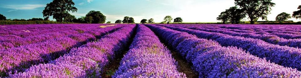 V_www.francecomfort.com_lavendel_vakantievilla_Frankrijk-960x250-crop-fff