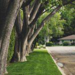 kunstgrassen laten leggen Gras en Groen
